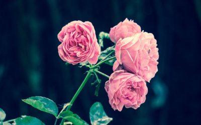 Ползите от присъствието на цветя в дома
