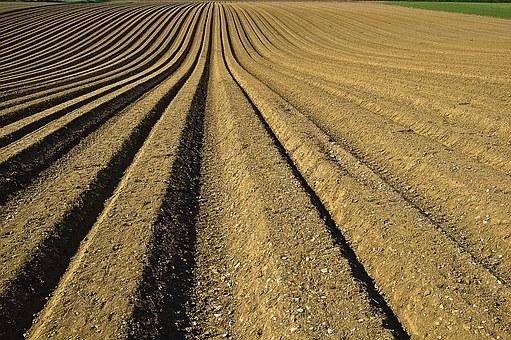 Оправдана инвестиция ли е изкупуването на земеделски земи?